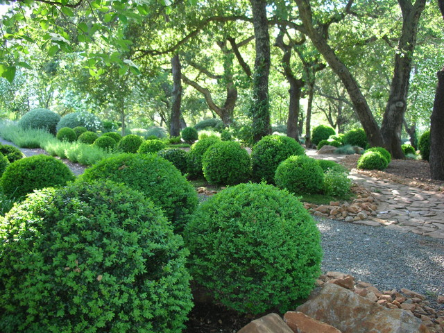 Boxwood Shrubs Landscape Traditional with Fieldstone Formal Hedge Gravel