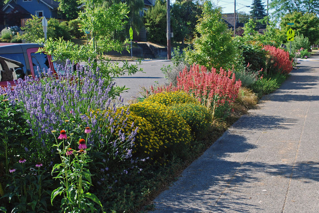 Drought Tolerant Landscaping Landscape Contemporary with Border Curb Strip Drought