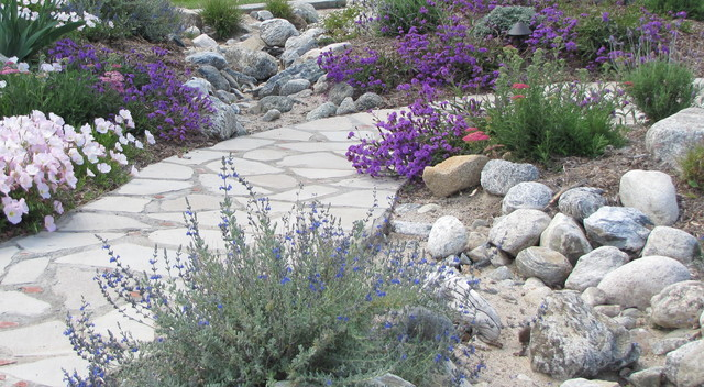 Drought Tolerant Landscaping Landscape Mediterranean with Butterfly Colorful Garden Cottage