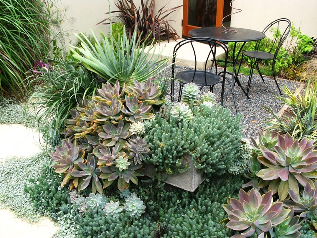 succulent arrangements Landscape Contemporary with gravel outdoor dining path