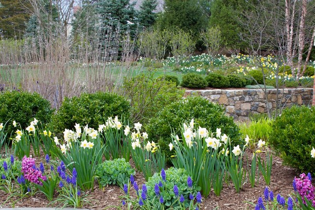 e12 bulb Landscape Traditional with Bulbs daffodils Hyacinths large