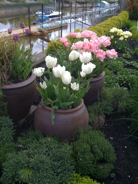 e12 bulb Landscape Traditional with cottage cottage perennial pink