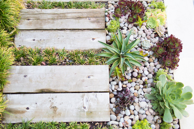 Faux Succulents Landscape Contemporary with Container Garden Drought Tolerant