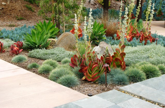 Lowes Lakeland Fl Landscape Contemporary with Agave Beach Pebbles Boulder