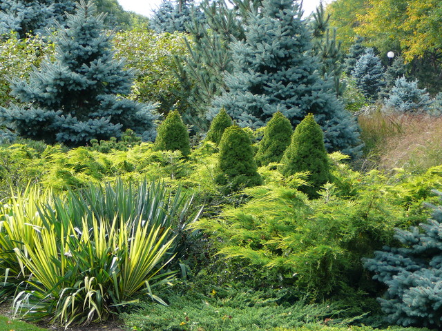 Lowes Laurel Ms Landscape Contemporary with Conifer Coniferous Evergreen Juniper
