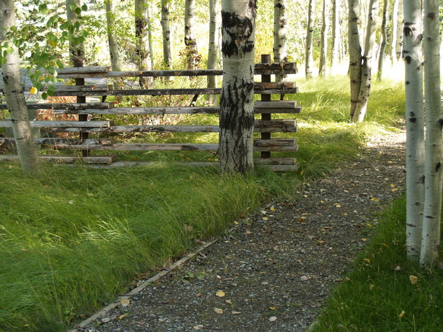 lowes vinyl fence Landscape Rustic with birch tree grass gravel