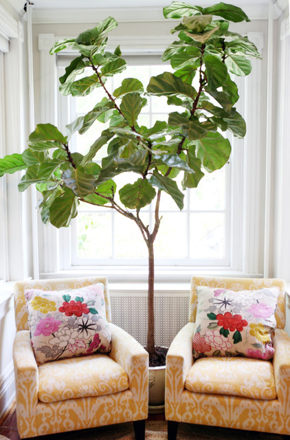 Queen Headboards for Sale Family Room Traditional with Colorful Fig Tree Living