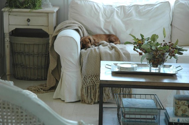 slipcovers for couch Living Room Shabby-chic with dog farmhouse flea market