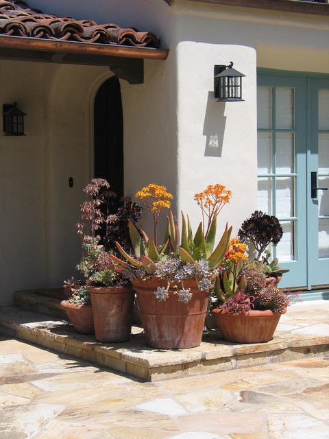 Succulent Arrangements Landscape Mediterranean with Arch Door Covered Entry