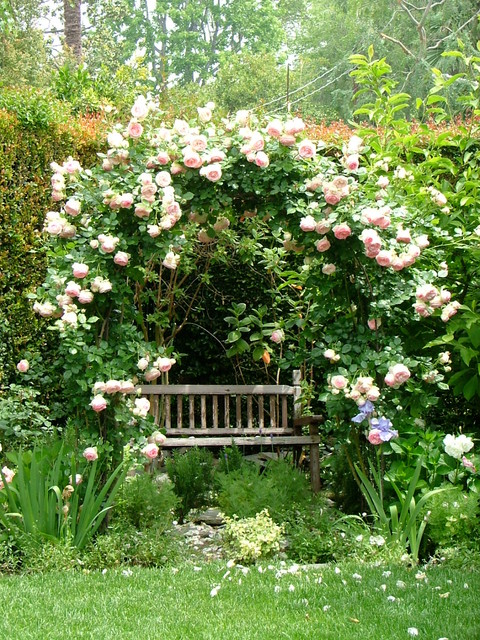 Sun Shade Canopy Landscape Shabby Chic with Arch Climbing Roses English