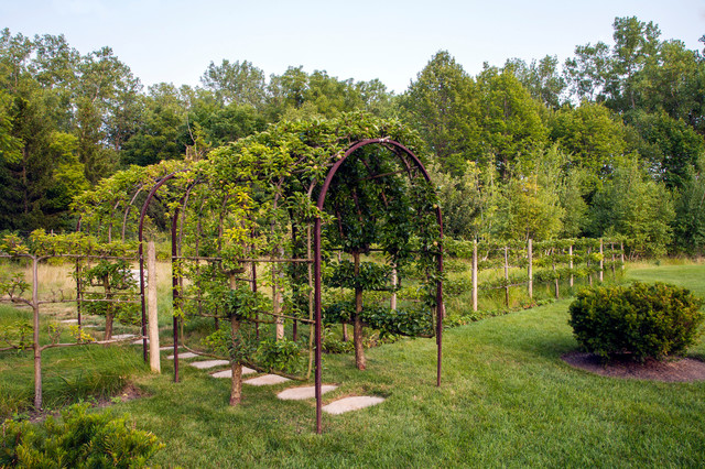 Velux Sun Tunnel Landscape Traditional with Arbors Arch Boxwood Espalier