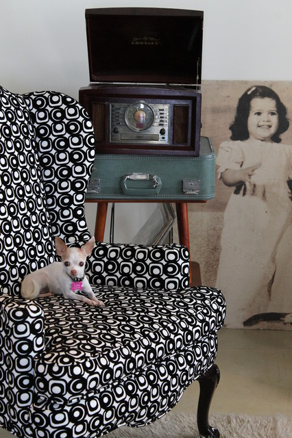 wingback chair Living Room Eclectic with chihuahua