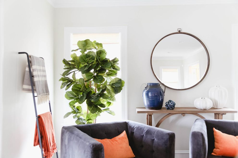 Our Houzz: Bright, Breezy Living Room Caps a Hectic Renovation Fiddle Leaf Fig Tree Care for Transitional Living Room Living Photos Transitional Living Rooms