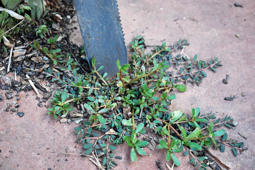 Weeding with Hori Hori Knife Vinegar Weed Killer Recipe for Landscape Outdoor Photos Tree Services